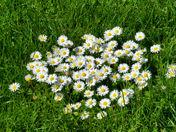 Flowers May 10, 2012.jpg