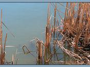 Rusty Grasses