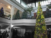 Festival of Trees at the Empress