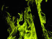 Green blaze