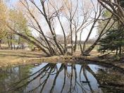 Winnipeg Zoo pond trees