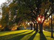 Sunset through trees at Legislative grounds Winnipeg