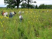Hiking through a tallgrass prairie