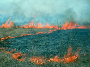 Spring Burn at Ojibway Prairie Provincial Nature Reserve