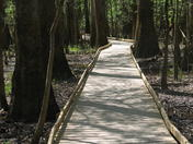 Boardwalk through Congaree Swamp National Park, South Carolina