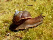 Snail at Carolina Sandhills National Wildlife Refuge, SC