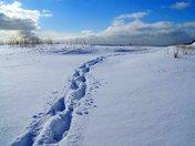 Foot-prints,snow,winter,Newfoundland,