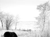 Foal in Winter