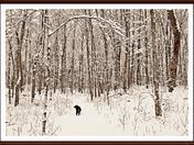 Ishka in woods1.JPG