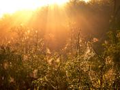 Webs of Gold