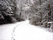 White Trails
