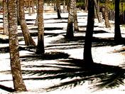 Salsa shadows