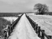 Winter on The Marsh, B & W