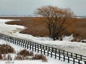 Winter on The Marsh