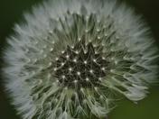 Seeds on the Wind (soon)