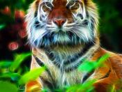 Sumatran tiger fract.jpg