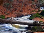 Webster Falls creek downstream