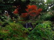 Spring Creek  High Park