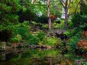 Spring Creek running through High Park