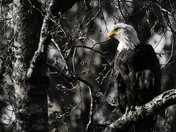 ghost_eagle_BW-2.jpg