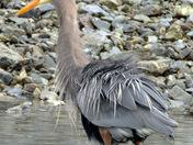 Your Best Heron Photo