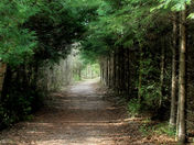 A Path To Walk.jpg