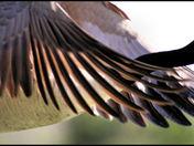 wings a.jpg