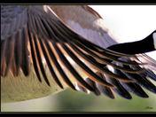 wings cg.jpg