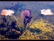 lily leaves.jpg