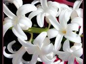 hyacinths cg.jpg