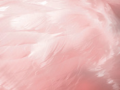 light pink feathers.jpg