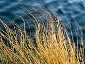 dancing grasses.jpg