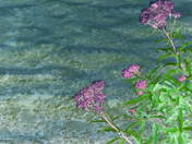 lake abstract.jpg