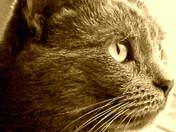 kitty kat.JPG