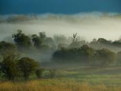 Creston flats in the fog