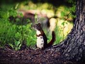 Curious Friend