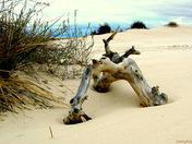 Not Driftwood !