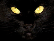 'Kitty Kat'