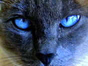 'Old Blue Eyes'