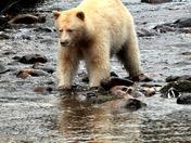 'Spirit Bear' Fishing