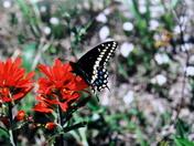 Love Butterflies #2