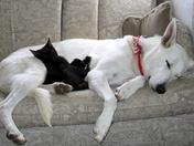 Dogz & Katz