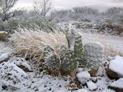 Cactus & Snow ?