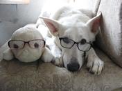 Two Studious Buddies