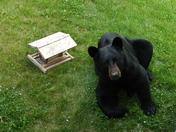 Hungary Bear