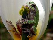 Treefrog & Amp