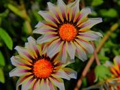 Hypnoflowers
