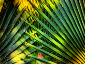 Palm Fronds2
