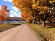 Fall Foliage in Ile D'Orleans