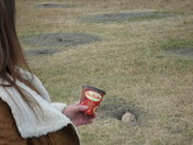 Prairie Dogs on the Prairies